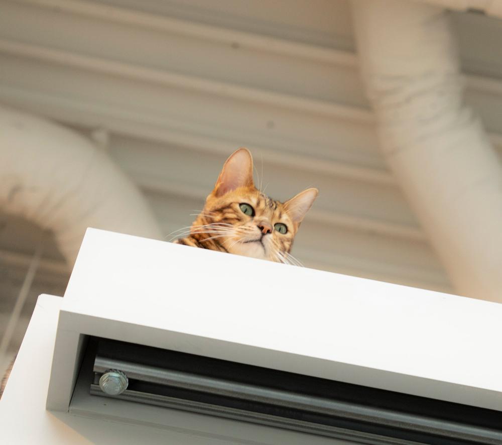 事務所の猫